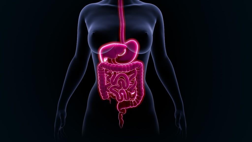 lučník - Žlučníková dieta je nejen pro ty, které trápí onemocnění žlučníku