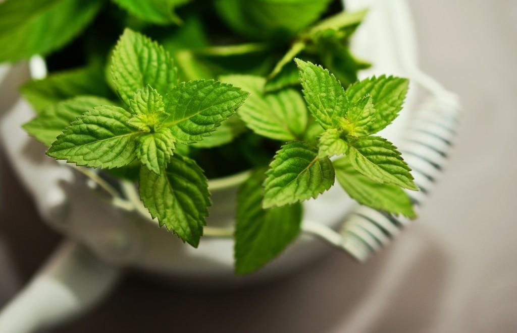 peppermint-máta - 12 nejlepších triků pro snadné hubnutí, které musíte ještě letos vyzkoušet